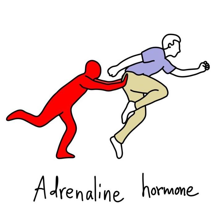 la adrenalina entre las causas de disfunción eréctil
